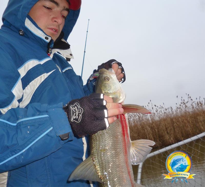 www.sazanya-bukhta.ru/wp-content/uploads/2014/11/D0021.jpg