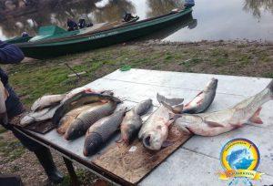 Гордость рыбаков